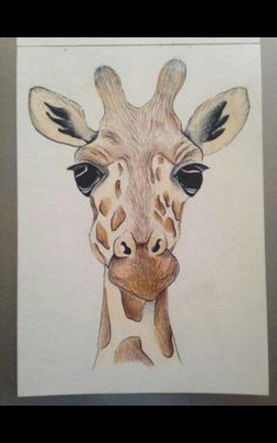 giraffe drawing  cute giraffes art giraffe art
