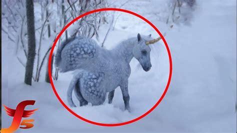 Real Life Pegasus