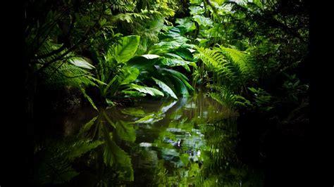 sleep fast  amazon rainforest relaxation