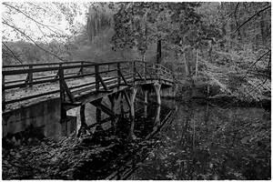 Herbst Schwarz Weiß : herbst in schwarz weiss foto bild natur landschaft bilder auf fotocommunity ~ Orissabook.com Haus und Dekorationen