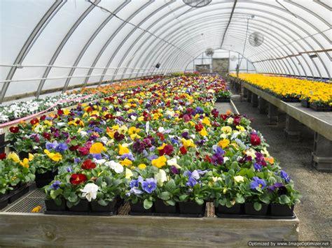 rosehill farms plant garden nursery n kansas city
