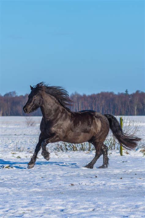 Pferd Magenprobleme Was Füttern