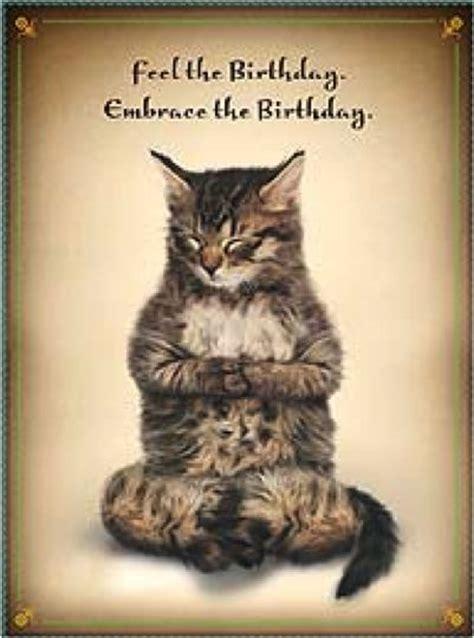 happy birthday yoga cat birthdays meditation