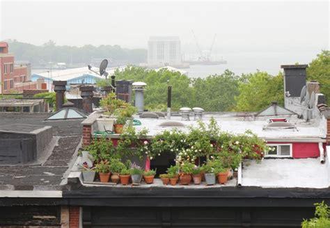 10 Secrets For Growing An Edible Urban Balcony Garden