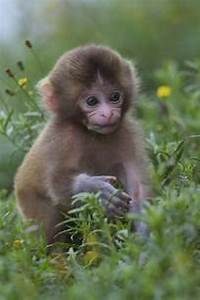 Cutest Baby Animals | All about animals | Pinterest