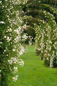 les 65 meilleures images du tableau jardins en longueur With comment amenager un jardin tout en longueur 3 comment amenager un petit jardin 4 pieds tables