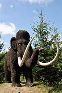 Mammutit Ja Mastodontit