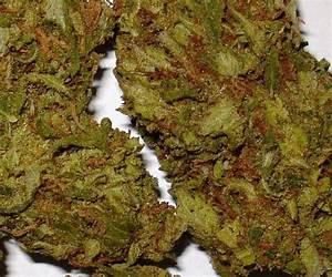 Pineapple Kush Marijuana   Pineapple Kush some more killer ...