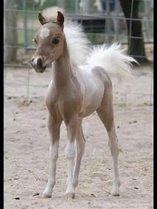 Baby horse | Baby horses | Pinterest | Too cute, So cute ...