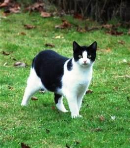 Weißer Wurm Katze : schmerzlich vermisst werden ~ Markanthonyermac.com Haus und Dekorationen