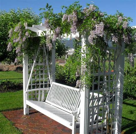 wisteria trellis ideas the 25 best ideas about wisteria trellis on pinterest wisteria wisteria pergola and trellis