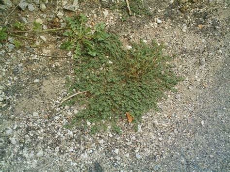 si鑒e social gamm vert jardinerie du quercy cahors 28 images jardinerie fleurance plancha electrique gamm vert top plancha jardinerie du quercy commer 231 ants