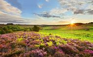 Hampshire England Landscapes