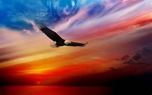 American Bald Eagle Pictures Wallpaper WallpaperSafari