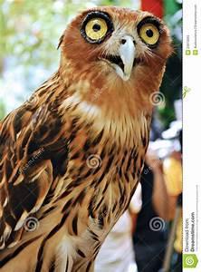 3d Owl Design Surprised Owl Stock Photos Image 23910093