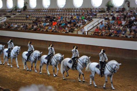 horses spain andalusian dance academy royal adventures equestrians jerez called