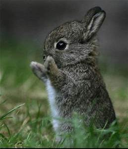 Cute Baby Animal Pictures - Project Cool