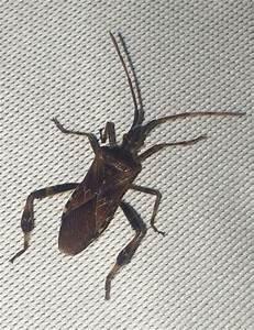 Mückennester In Der Wohnung : hilfe was f r ein k fer ist das wohnung insekten ~ Watch28wear.com Haus und Dekorationen