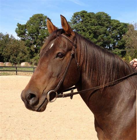 horse quiet quarter quarterhorse horsezone 3hh