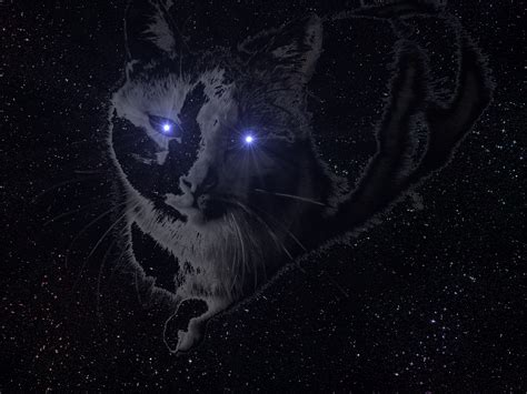 Space Cat Full Hd Wallpaper And Background 2816x2112