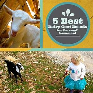 58 Best Images About Farming On Pinterest