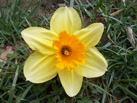 Nature, Petal, Botany, Garden, Close