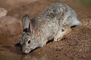 Cheek Teeth Problems In Rabbits