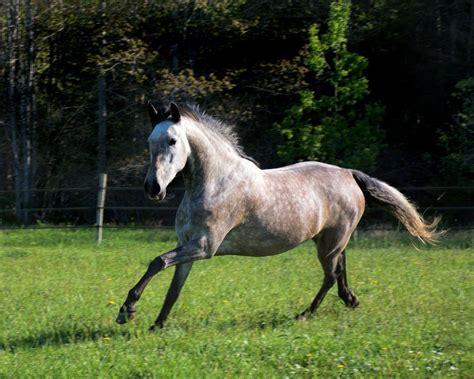 horse flickr breeds most popular december