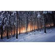 Winter Landscape Forest Wallpapers HD / Desktop And