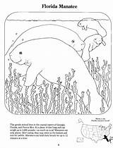 Coloring Manatee Pages Manatees Template Popular Sketch Coloringhome sketch template
