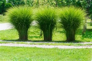 Garten Ohne Gras : pampasgras bildet keine wedel woran liegt 39 s ~ Sanjose-hotels-ca.com Haus und Dekorationen