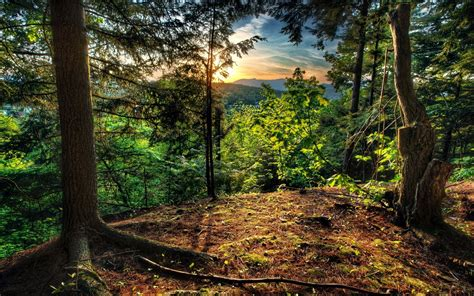 Beautiful natural scenery wallpapers 4 17 1440x900 wallpaper. Big Beautiful Nature Green Forest Images | HD Wallpapers