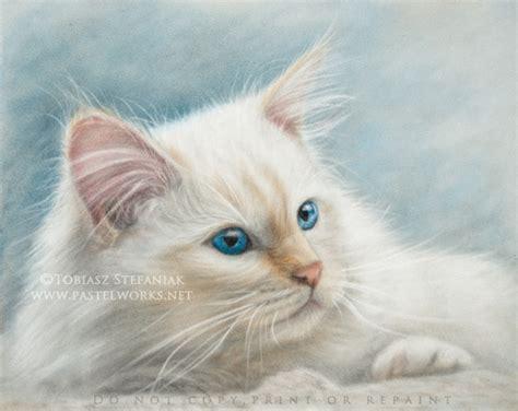 Tag Cats Drawings  Pet Portraits & Animal Art