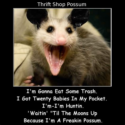 Possum Memes - possum memes 28 images would you like to see my magic card collection pathetic playing pop