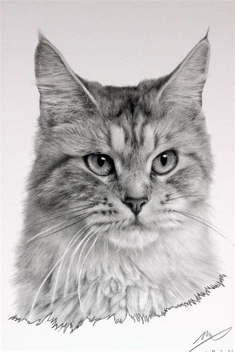 cat drawing  sharppower  deviantart