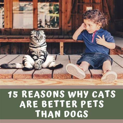 than better why cats dogs