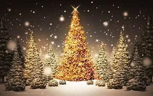 Wallpaper night, snow, new year, christmas tree, christmas ...