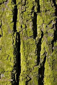 Free stock photos - Rgbstock - Free stock images | Bark ...