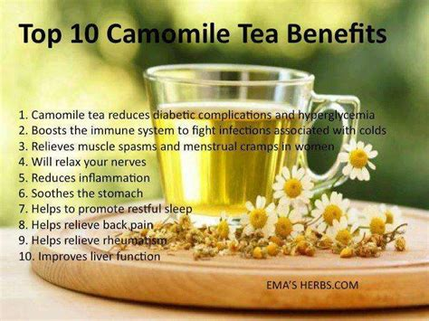 9966 best tea to drink before bed top 10 reasons to drink camomile tea realfarmacy