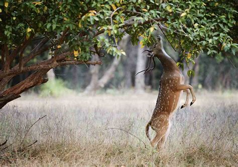how to keep deer out of your garden keeping deer out of your garden best reports