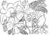 Coloring Adult Birds Printable Paradise sketch template