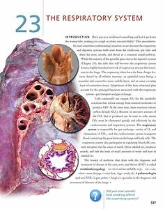 Chapter 23  The Respiratory System By John Wiley And Sons