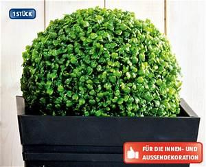 Aldi Solarleuchte Kugel : k nstliche buchsbaum dekoration aktion bei aldi suisse ~ Buech-reservation.com Haus und Dekorationen