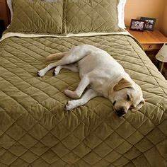 Our dog proof bedding is designed to protect your bed from for Dog proof material