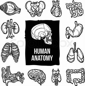 Human Anatomy Internal Body Organs Sketch Decorative Icons