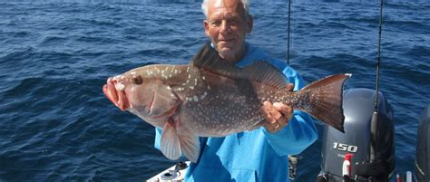 grouper fishing florida coral cape charters revenge reel story swfl offshore