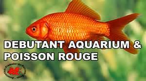 d 233 butant aquarium et poisson