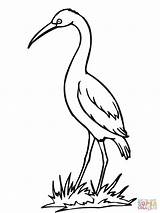 Coloring Crane Stork Bird Drawing Sandhill Storks Clipart Printable Getdrawings Clipartbest Popular Library Coloringhome sketch template
