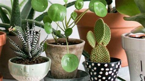 plante d intérieur originale plante d int 233 rieur originale les bonnes id 233 es c 244 t 233 maison