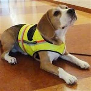 experimental 47 disease sniffing super dogs sni